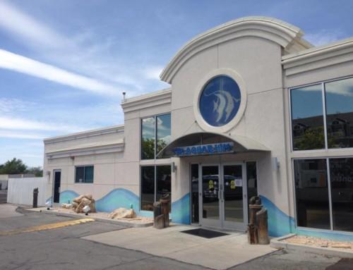 Next Stop: The Aquarium