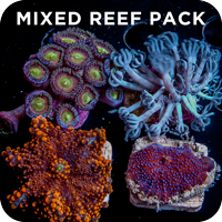 MIXED REEF PACK